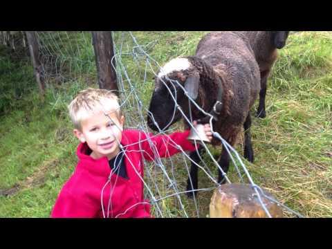 Adam ringing a goat's bell in Wengen, Switzerland
