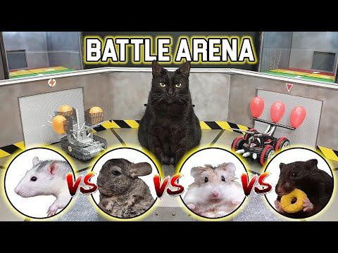 BATTLE of RC CARS - CAT / HAMSTER / RAT / CHINCHILLA