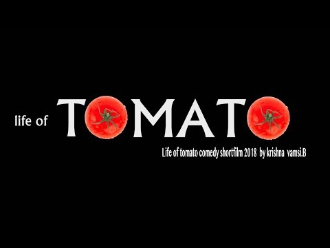 LIFE OF TOMATO  {short film }