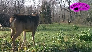 Whitetail Deer Fighting January - Hawg-n-sons Tv