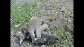 A cat who married to a monkey