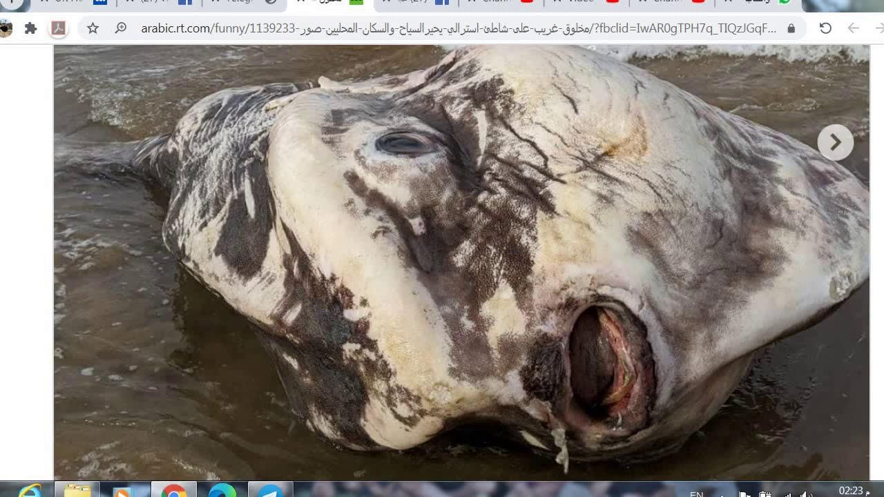 مخلوق غريب على شاطئ أسترالي يحير السياح والسكان المحليين صور لاينصح لآصحاب القلوب الضعيفه