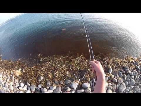 MULLET ON THE FLY - SWFF IRELAND