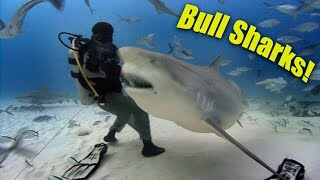 Bull Sharks! (HD) | JONATHAN BIRD