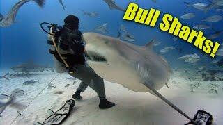 Bull Sharks! Hd   Jonathan Bird's Blue World
