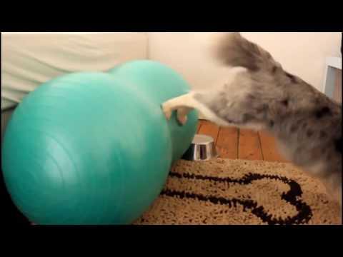 Marnie sheltie, Amazing dog tricks