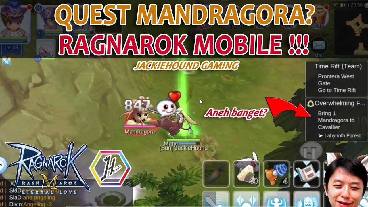 Quest Bring 1 Mandragora To Cavallier Gimana Caranya Ragnarok