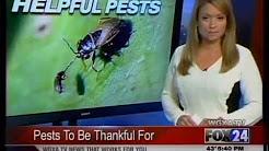Fall Pest Control & Pest Prevention Tips