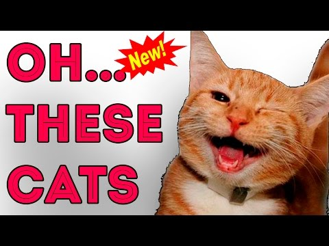 Ohh! These Funny Cats : ) comedy videos - cute cats playing, jumping, and funny moments