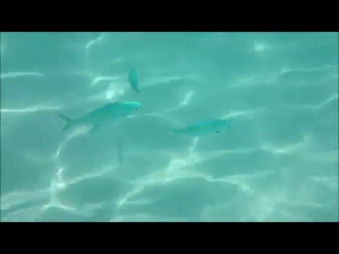 Redang Under Water Exploration