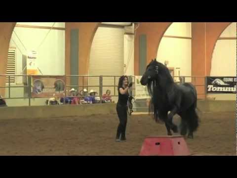 FRIESIAN STALLION UNBELIEVABLE, Frederik the Great
