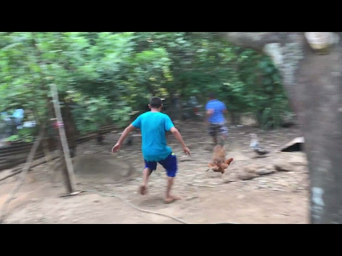 Caceria de gallinas indias. De regreso a casa. Mision Rescate del rio. Parte 8/8
