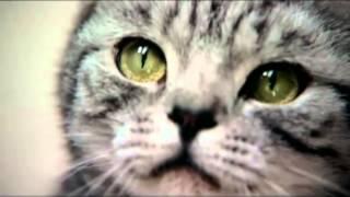 вискас глазами кошки
