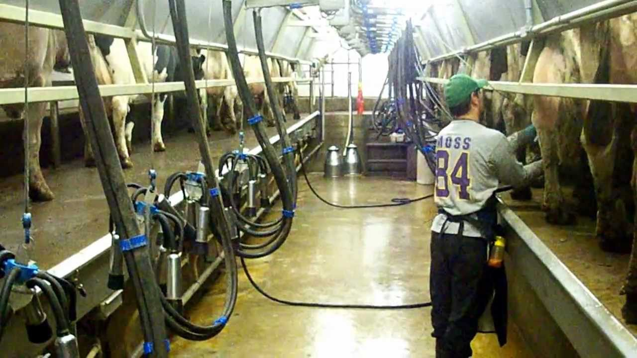 Trans Iowa Low Cost Milking Parlor Part 1 Youtube