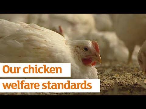 Our chicken welfare standards | Sainsbury's