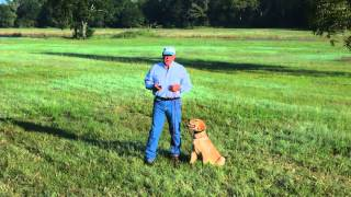 The electric collar and Positive Reinforcement  Lesson 4
