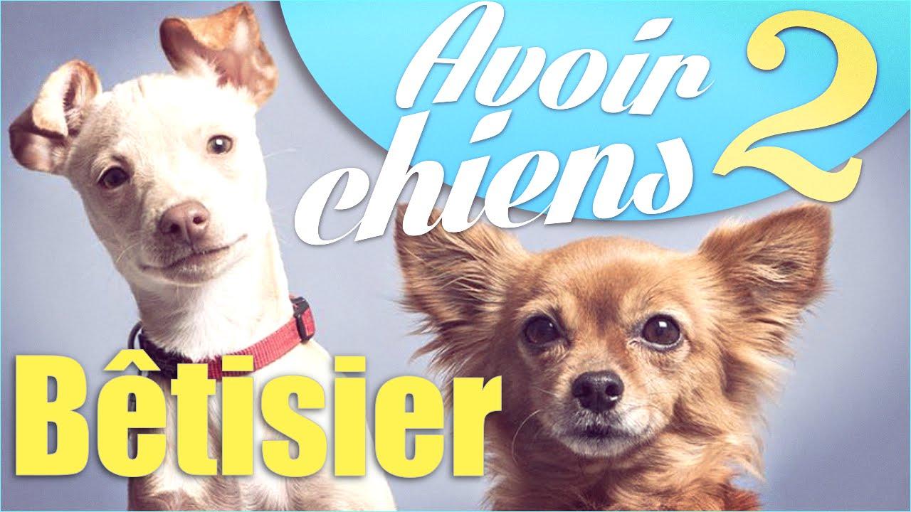 "Bêtisier ""Avoir 2 chiens"" – Natoo"