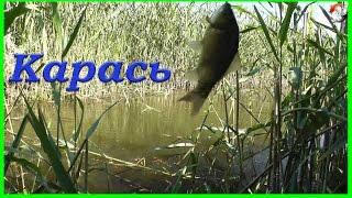 Поклевки КАРАСЯ на поплавочную удочку. Рыбалка, Fishing. Ловля Карася на поплавок(Поклевки КАРАСЯ на поплавочную удочку. Рыбалка, Fishing. Ловля Карася на поплавок.….((Мой канал- это (в основном)..., 2016-10-29T15:42:52.000Z)