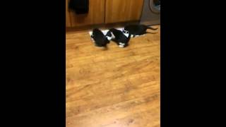 Crazy Kitten Feeding Time