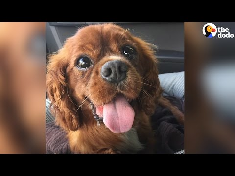 Dog Saved From Puppy Mill Gets The Ultimate Bucket List   The Dodo