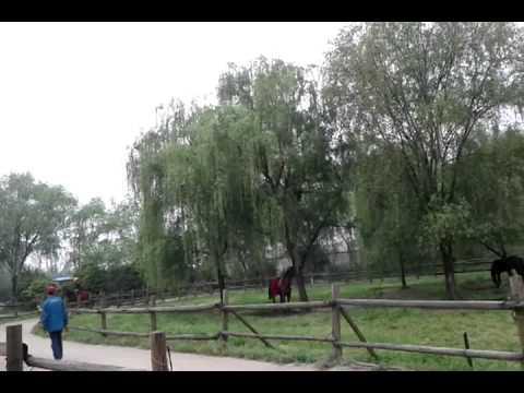 A horse ride at Hangzhou Zoo (that's my classmate Hu)