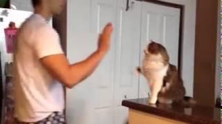 Кошка дает пять умора