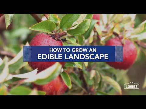 how to grow an edible landscape youtube