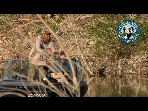 Fly Fishing Colorado - September - Brook Trout Spawn