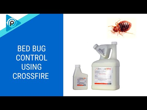 Bed Bug Control using Crossfire (episode 118)