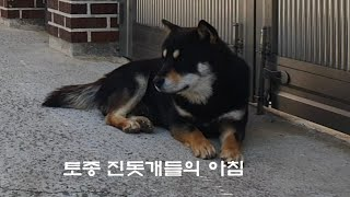 토종진돗개들의 아침^^