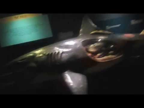 Aquarium at Blijdorp Rotterdam Holland :)