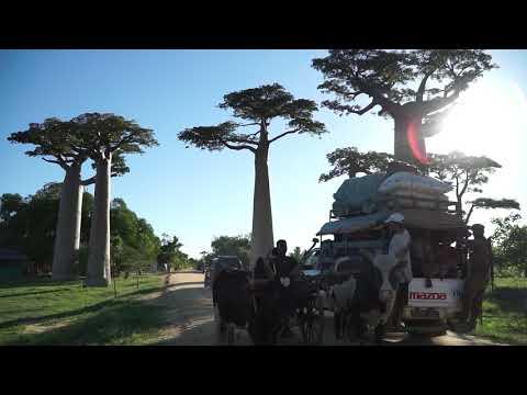 Baobab Avenue - Morondava, Madagascar