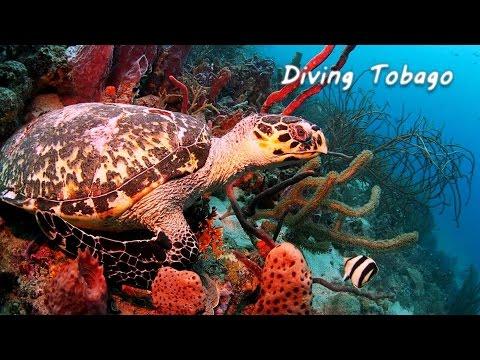 Diving Tobago