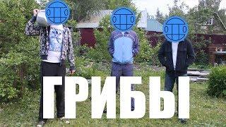 ГРИБЫ - ТАЕТ ЛЕД