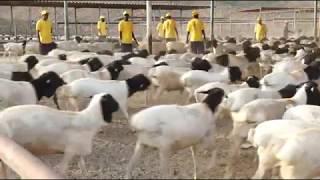 زيارة وزير الزراعة والثروة الحيوانية الصومالي لمزرعة الجابري