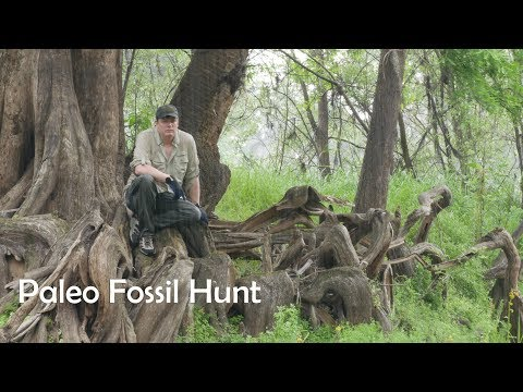 Paleo Fossil Hunting Peace River ( Please Subscribe  )