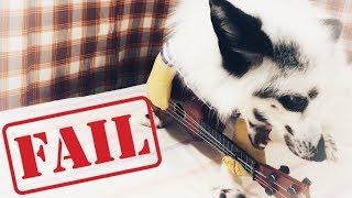 Pet Fox Fail
