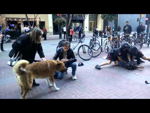 Calgary Police arrest man downtown, while his dog is biting them
