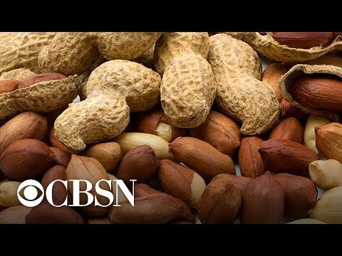 Possible treatment for peanut allergies