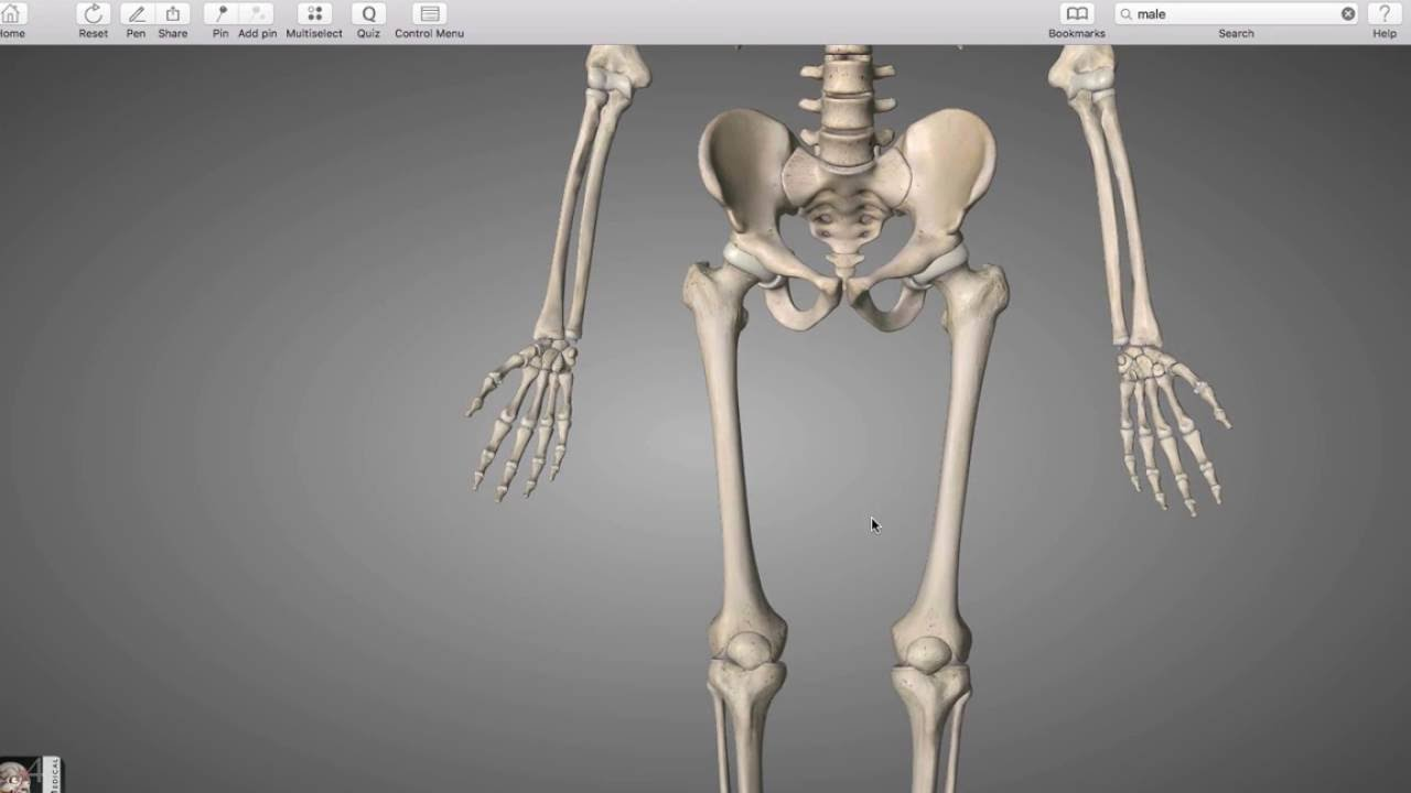 lower Extremity bones - YouTube