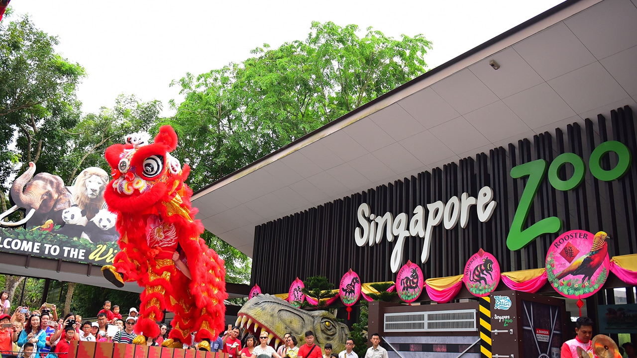 Singapore Zoo Lion Dance - Rooster in the Roo-Nar New Year ...