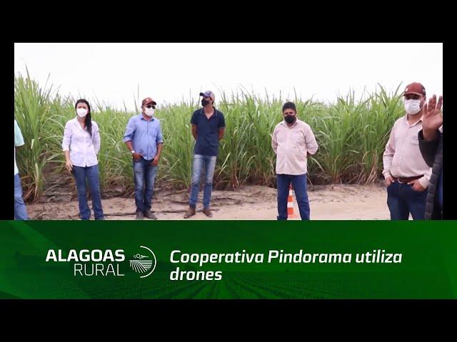 Cooperativa Pindorama utiliza drones para soltura de cotesias em canavial