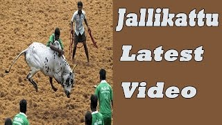Jallikattu latest Video | Kids playing Jallikattu | Funny video