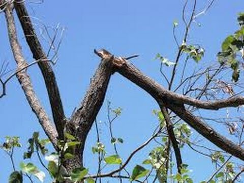 Image result for branch snapping