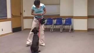 Dog Workshop Demo | Drsophiayin.com