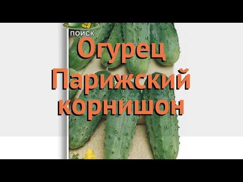 Огурец обыкновенный Парижский корнишон 🌿 обзор: как сажать, семена огурца Парижский корнишон