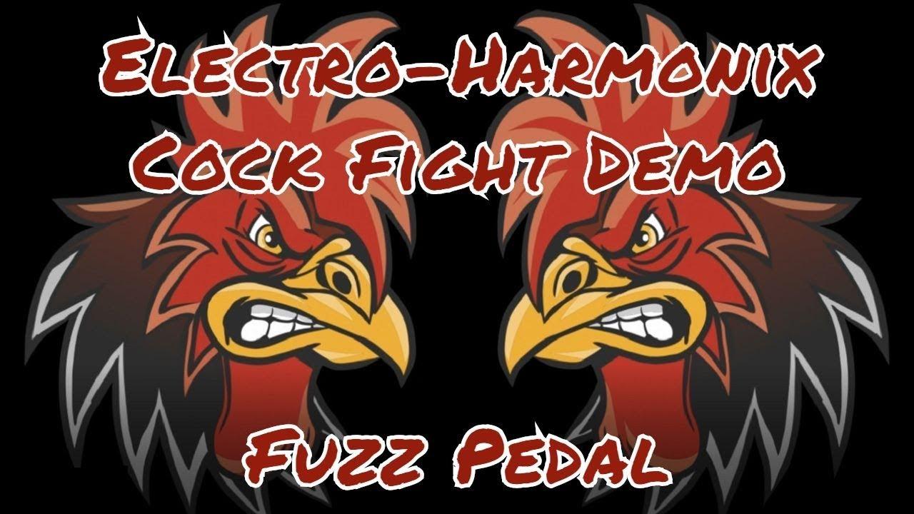 fighting gear Cock