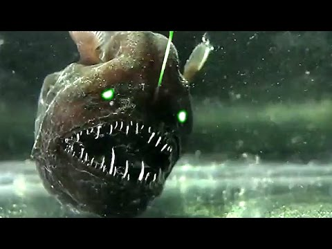 5 Mysterious Deep Sea Creatures Caught on Tape
