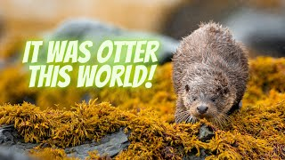 Photographing Otters on the Isle of Mull