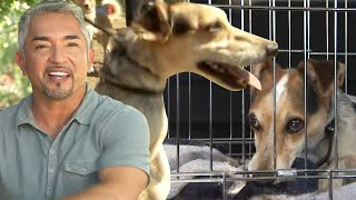 Cesar Millan Teaches How to Avoid Confrontations at the Dog Park